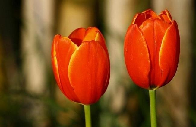 哪些花有毒性图片
