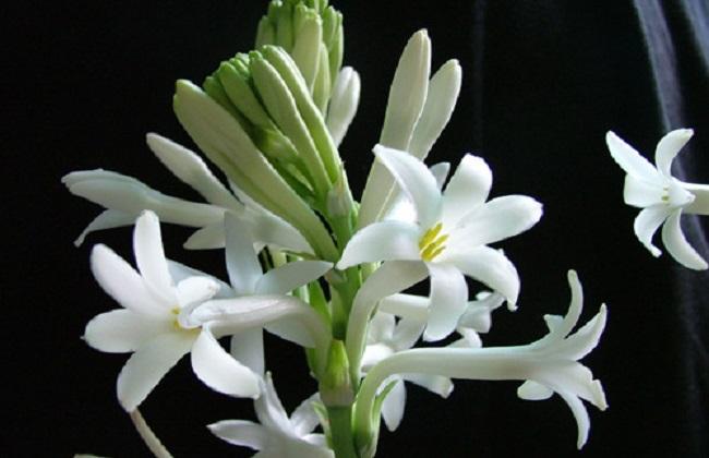哪些花有毒不适合在室内养图片