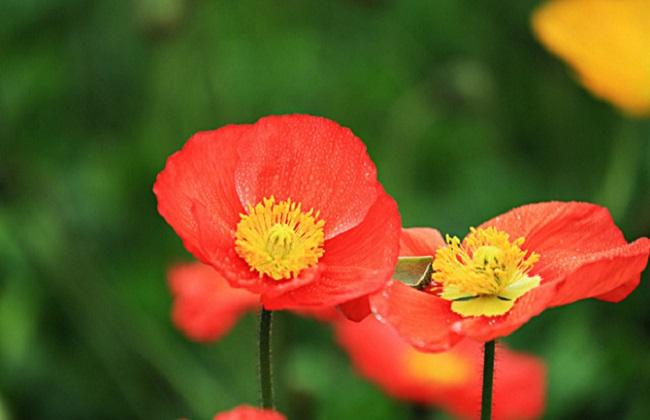 哪些花有毒不能养图片