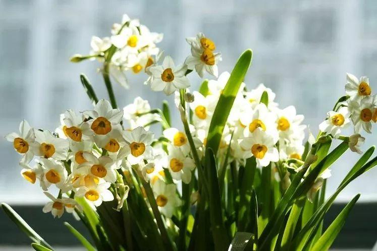 冬季室內適合養哪些植物?這8種耐寒日本av视频卉日本av视频美適