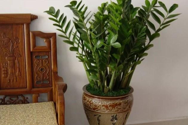 盆栽日本av视频卉越冬養護經驗,這8種綠植一定要注意保